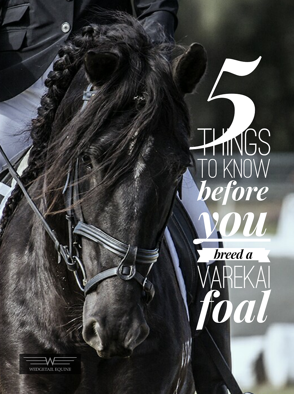 5 things to know before you breed a Varekai foal