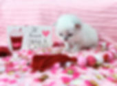 ragamuffin kitten