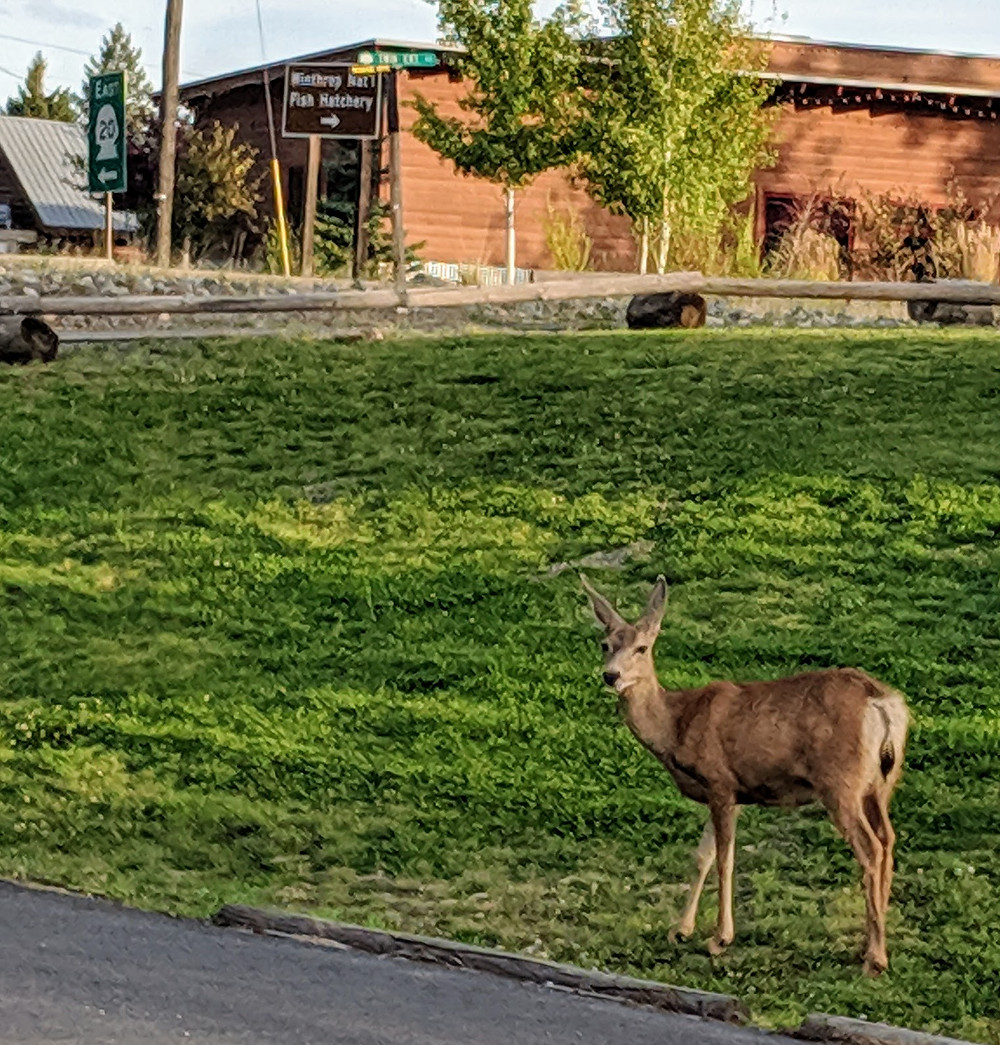 A Gazelle, Winthrop WA