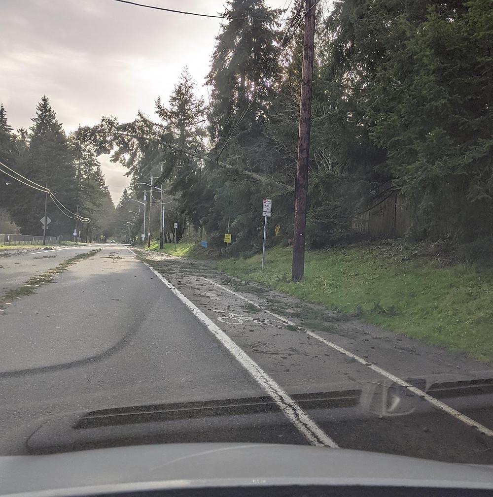 עץ שנפל על כבל חשמל