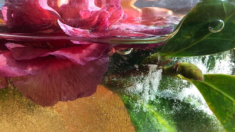 Camellia Fizz