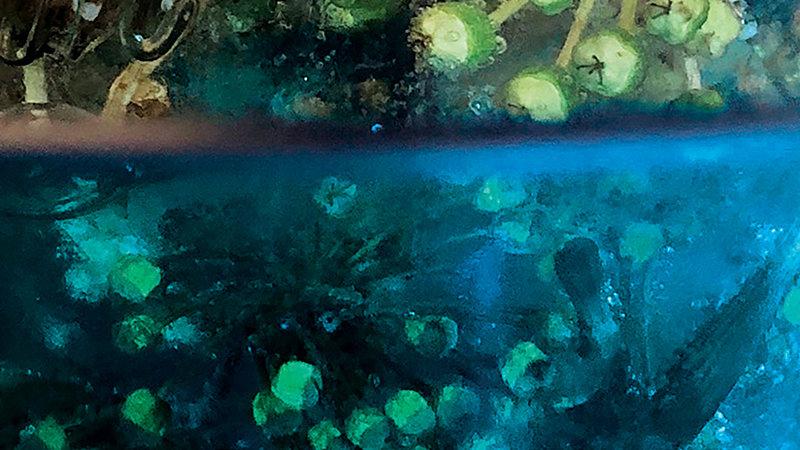 Japonica Ocean