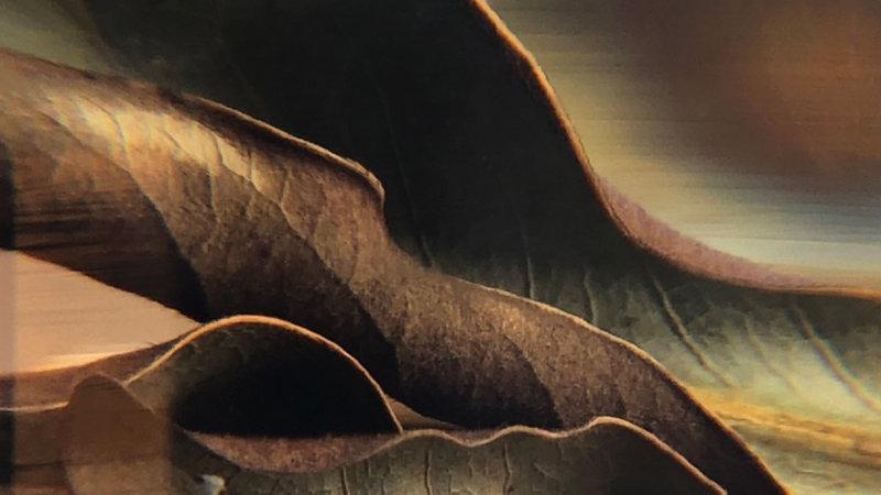Magnolia Brown