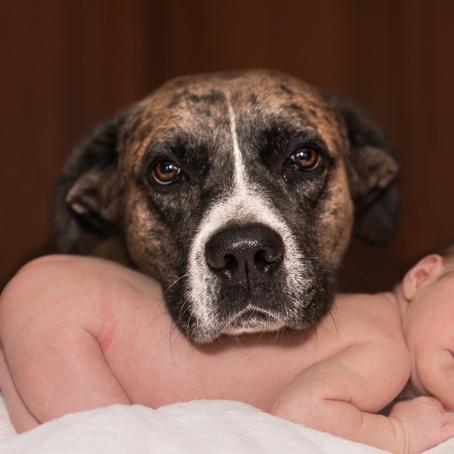 למה כל ילד צריך לגדול עם כלב?