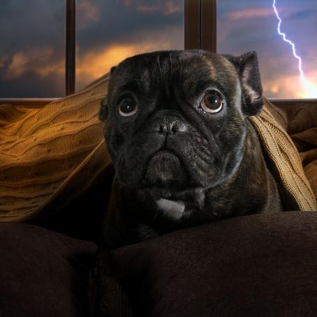 הכלב סובל מחרדות מרעשים חזקים?