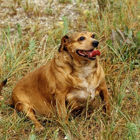 המדריך לגידול כלבים - חלק 3 : בעיות נפוצות עם כלבים בוגרים
