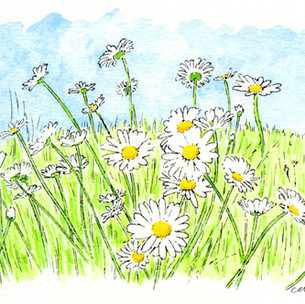 March of the Daisies 1