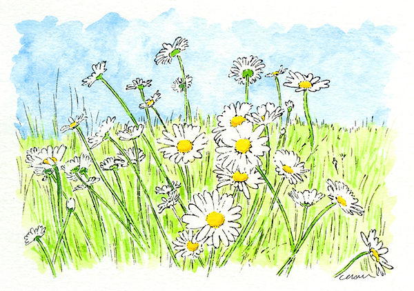 March of the Daisies i.jpg