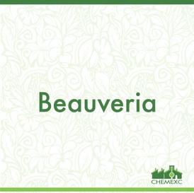 Beauveria