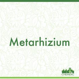 Metarhizum