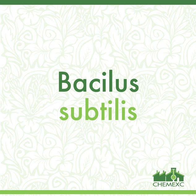 Bacilus subtilis