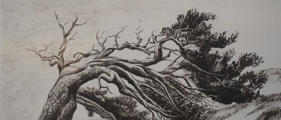 """Wind Harps Timberline"" Charles Strausenbeck"