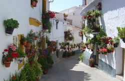 Typical flowery street