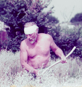 Henry harvesting with a scythe