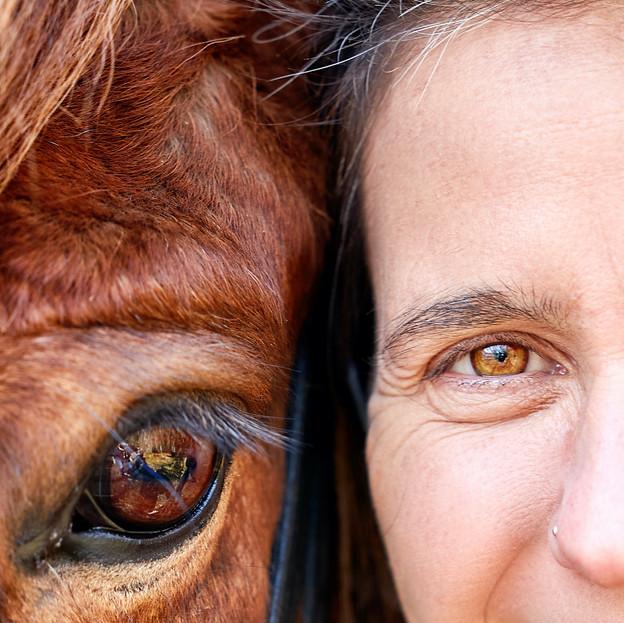 Bild 2 Tierfotograf Pferde Fotoshooting Luzern.jpg.jpeg
