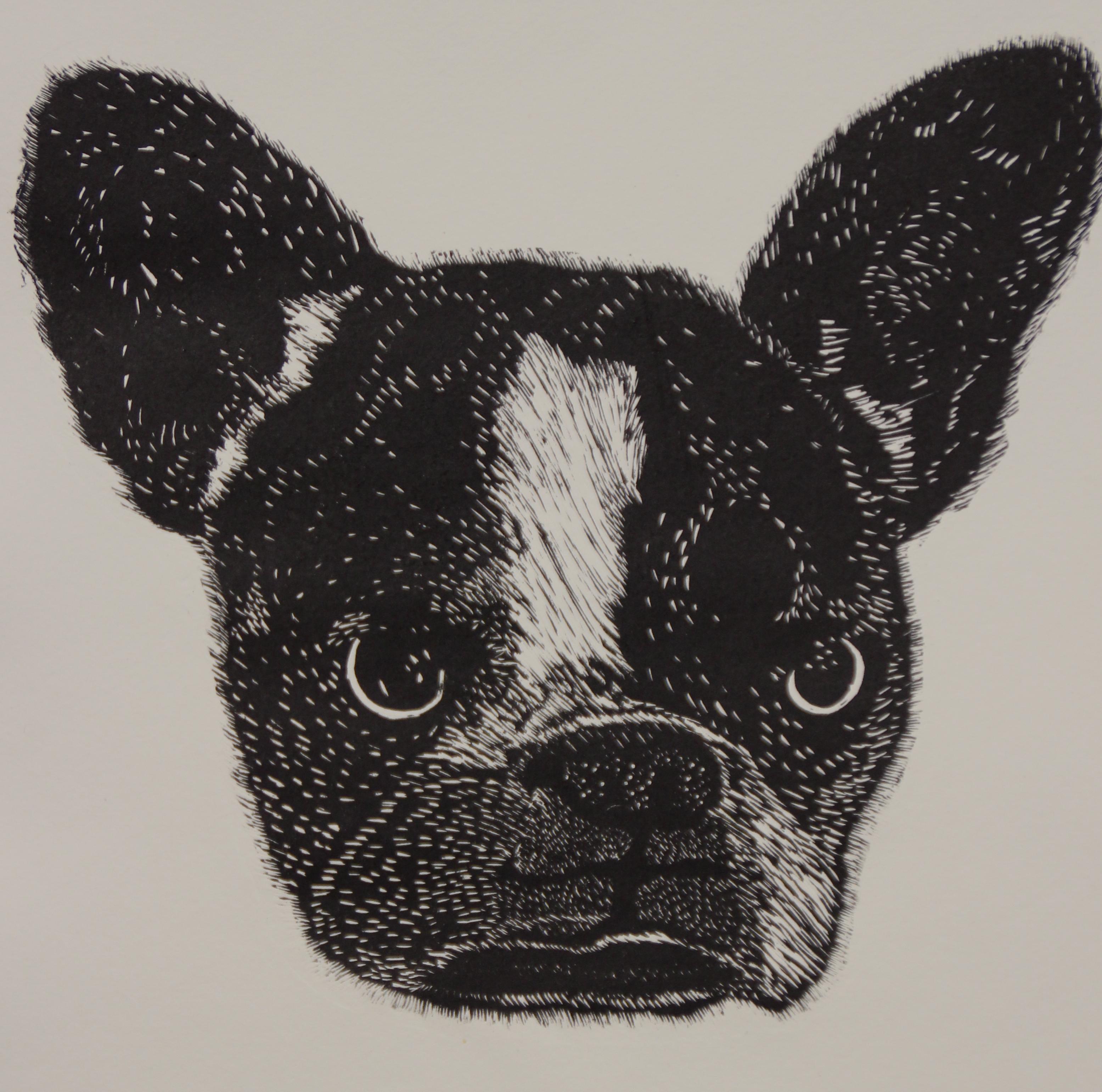 Black Dog - Vence, 2015