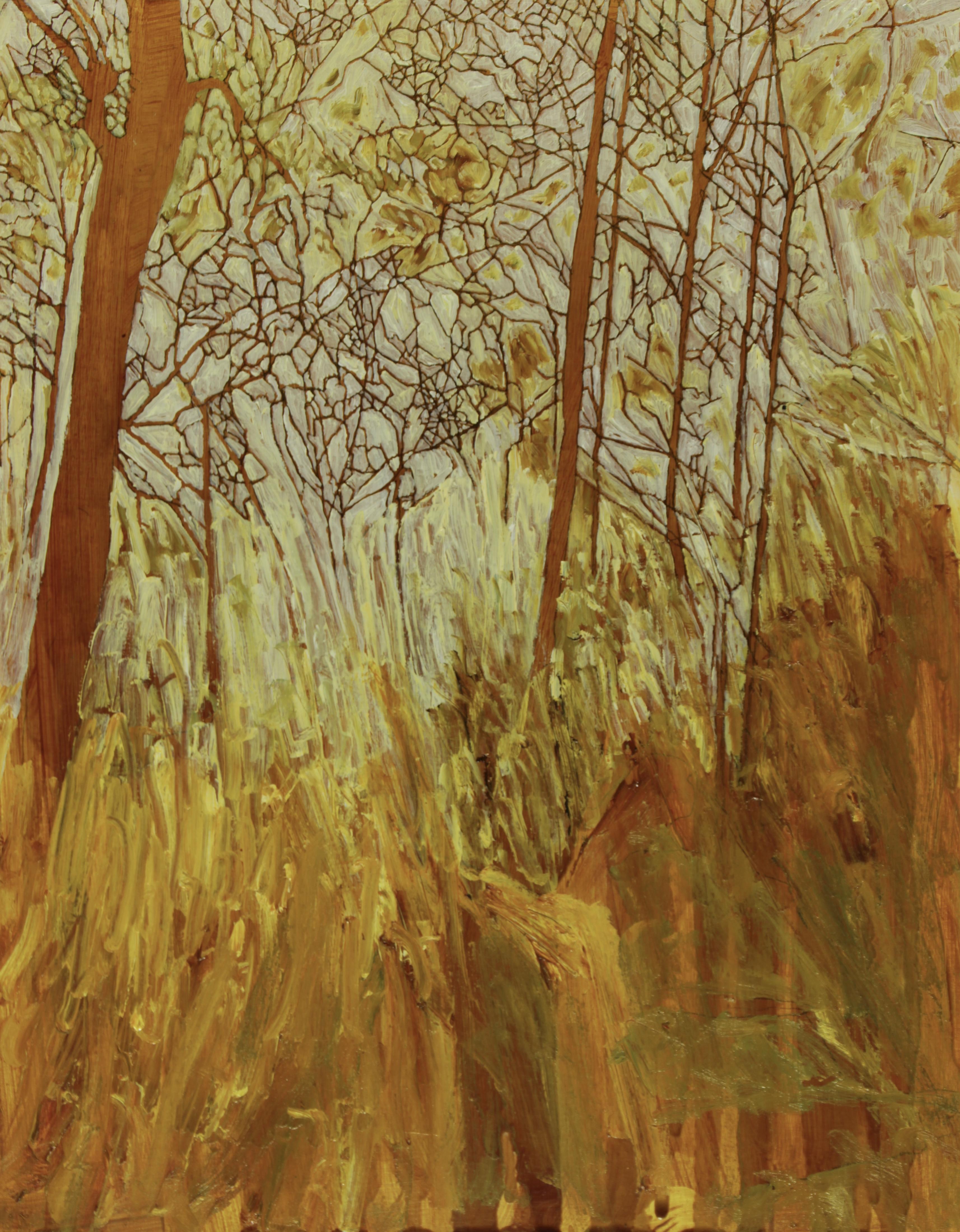 Grassy space, Watagans, 35 x 28 cm