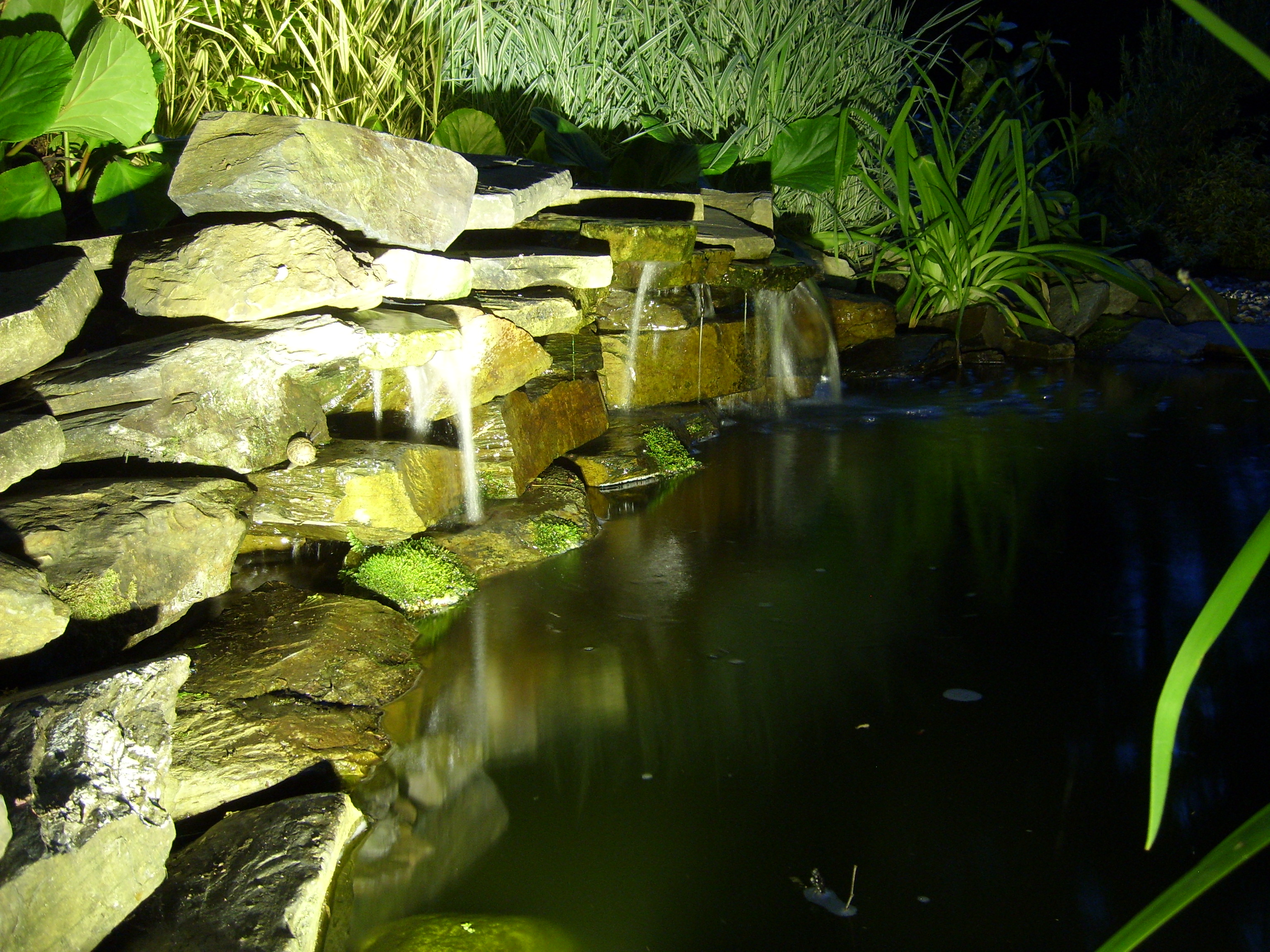 Pond Lights