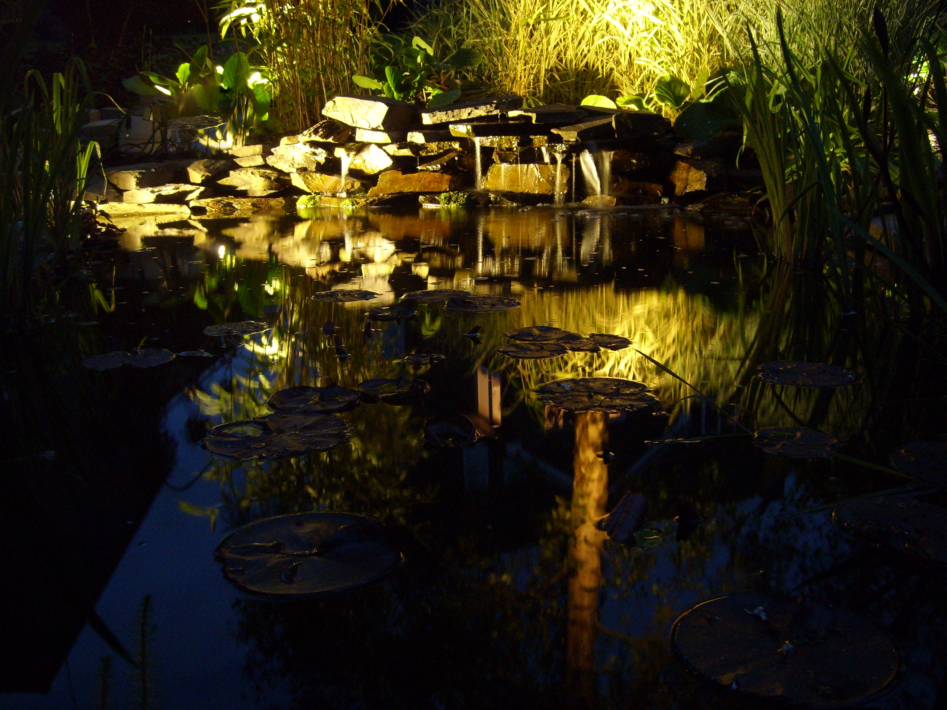 Lighting the pond