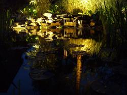 Lighting the pond