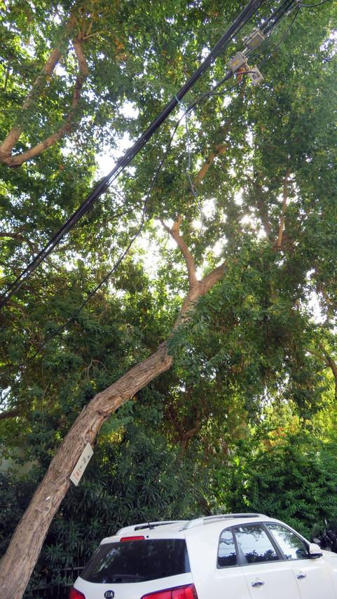 עץ בסביבה עירונית.jpg