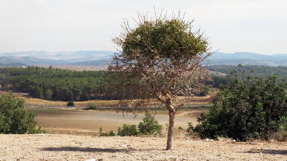 עץ במרחב סקר עצים.jpg