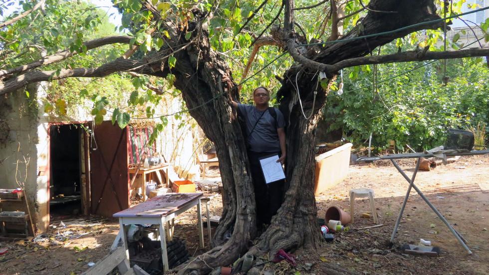 איתי חובשי סקר עצים בבית פרטי.jpg