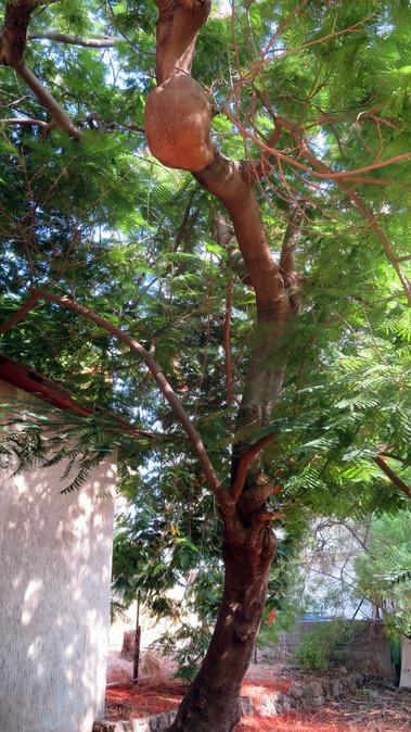 מיוחד בסקר עצים.jpg