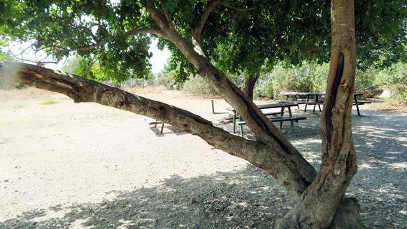 סקר עצים איתי חובשי.jpg