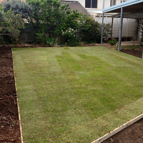 landscaping instant lawn