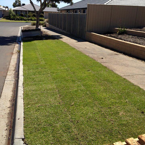 supply and install instant lawn