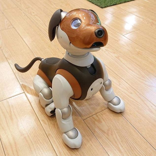 看板犬HALUちゃん