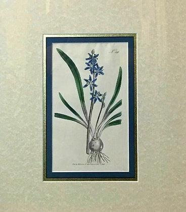 Antique Hand Colored Etching 1796 Curtis Botanical Garden Flower Framed Fine Art