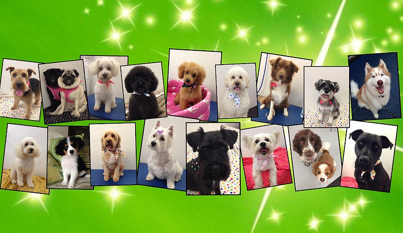 Dog Grooming Dee Why Northern Beaches Sydney