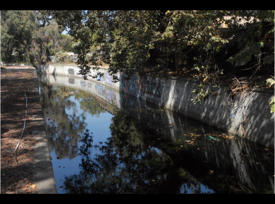 15. Downstream trees.jpeg