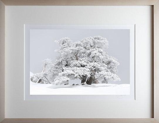 Cristian Rota, Inverno nel giardino degli dei