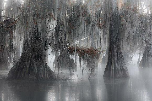 Cristian Rota, Atchafalaya trees