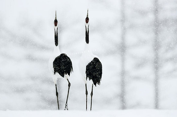 Cristian Rota, Winter in Hokkaido