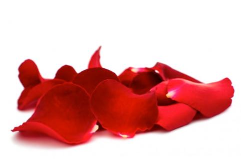 Pétales de rose - rouge