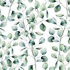 eucalyptus 1.jpg