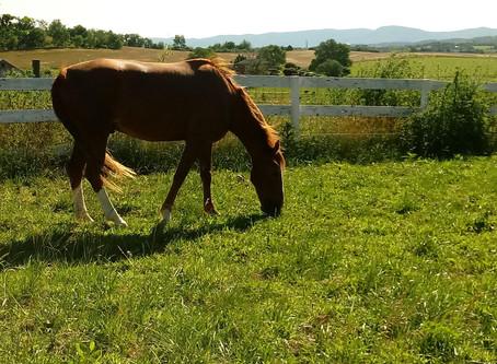 Welcome, Socks!  Risen Ridge Ministry's first horse!!!!