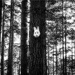 Mask in Woods 1 by FInn Gayton (ft)