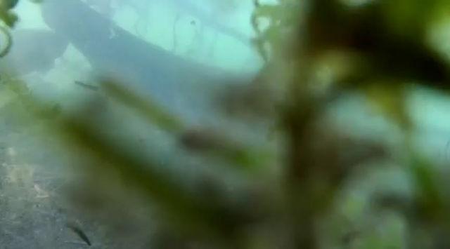 Fischvielfalt im Rhein