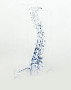 white-spine.jpg