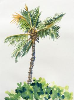 Coconut Palm III
