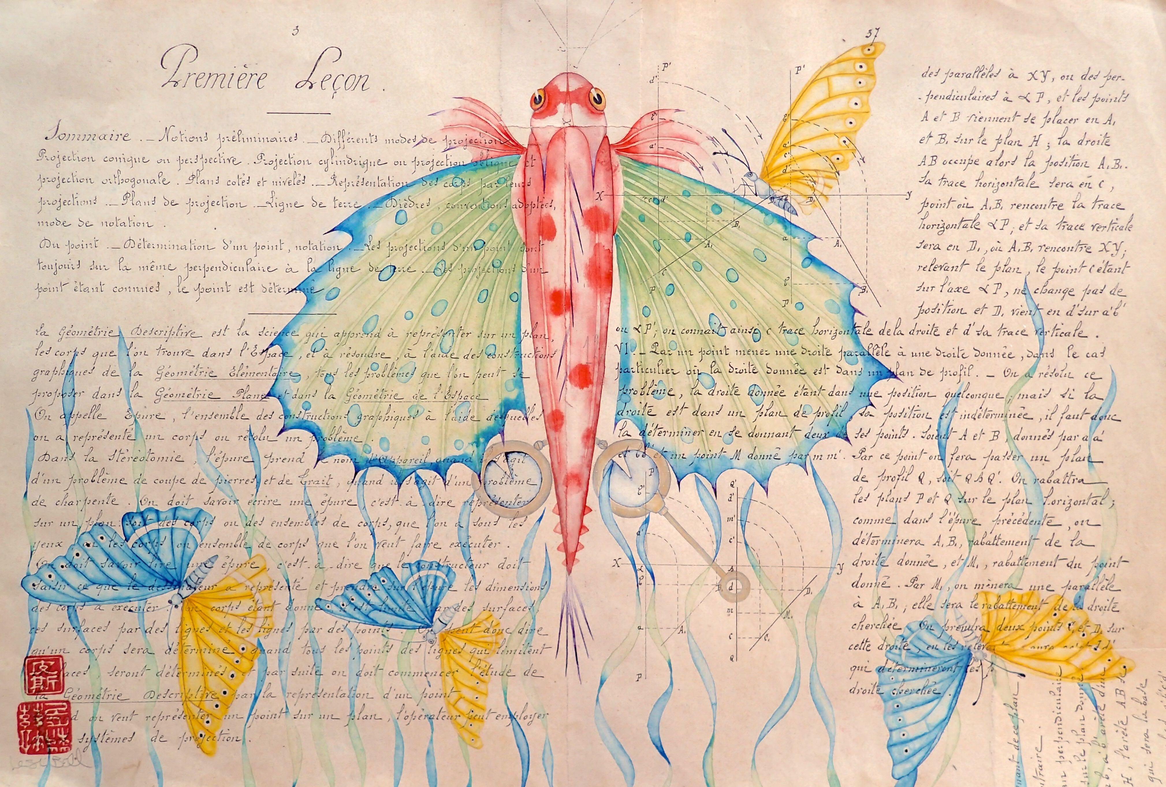 gurnard, gynandromorphic butterflies &seagrass