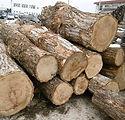国産栗の木の原木