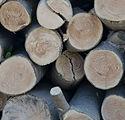 ブナの木の原木丸太