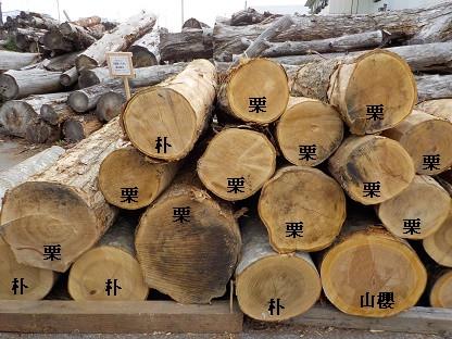 山形県南陽市産の広葉樹丸太が入荷