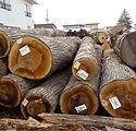 桂の木の原木丸太